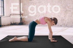Postura del Gato de Yoga y sus Beneficios (Marjaryasana)
