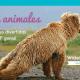 Día de San Antón: La relación entre Yoga y animales